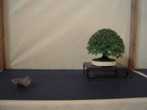 bonsai-di-olmo-francesco-copia_page15_image16